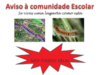 Aviso – A processionária ou lagarta do pinheiro